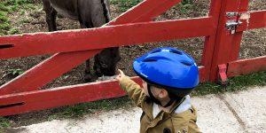 Passez un agréable moment en famille à la ferme Dehaudt