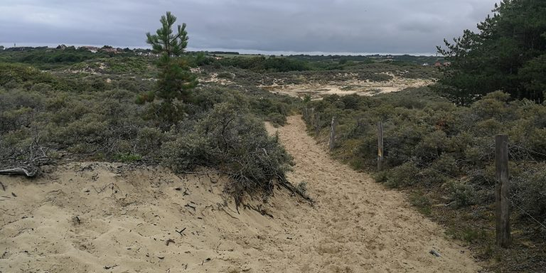 Observez des biches sur les dunes de la slack