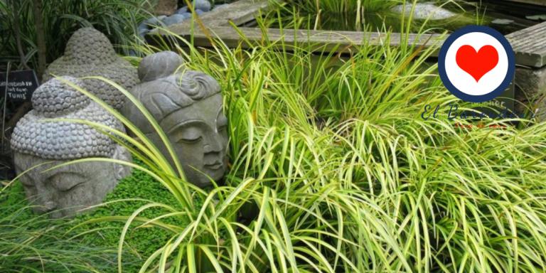 Venez vous détendre dans le jardin caché du Chimonobambusa