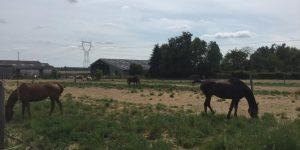 Explorez les campagnes environnant les Weppes