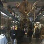 Voyagez dans le temps et dans l'espace au musée d'histoire naturelle de Lille